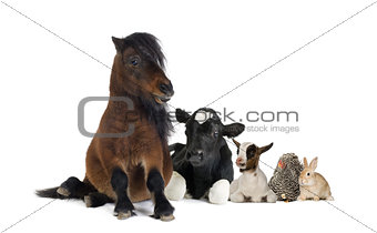 Group of farm animals isolated on white