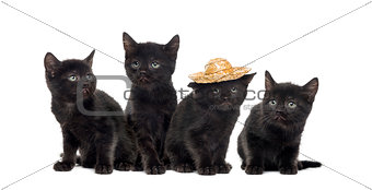 Group of a black kitten isolated on white