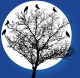 tree crows