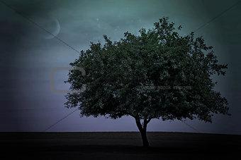 single tree with twilight sky