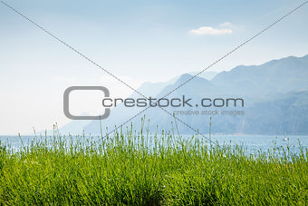 Green lavender flower bushes at pastel mountains background