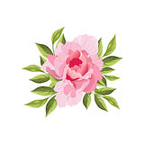 Peony Hand Drawn Realistic Illustration