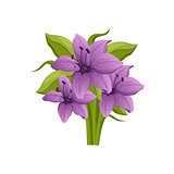 Purple Lily Hand Drawn Realistic Illustration