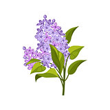 Lilac Hand Drawn Realistic Illustration
