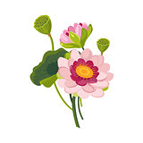 Pink Garden Flower Hand Drawn Realistic Illustration