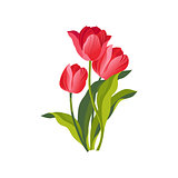 Tulip Hand Drawn Realistic Illustration