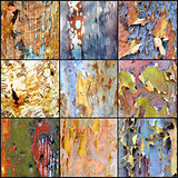 Collage of colourful Australian gumtree bark