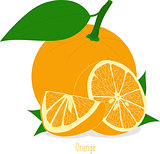 Orange slices, collection of vector illustrations