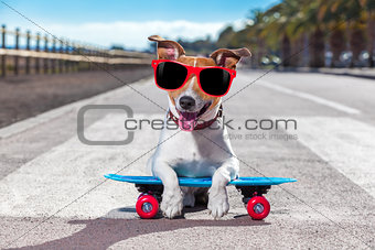 skater dog on skateboard