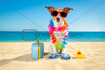 tourist dog at the beach