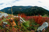 Golden Retriever in a Super Wide Angle Fish Eye Fall Mountainous