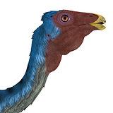 Caudipteryx Dinosaur Head