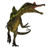 Ichthyovenator Dinosaur on White