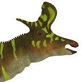 Lambeosaurus Dinosaur Head