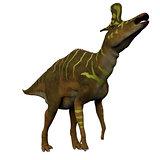 Lambeosaurus Dinosaur on White