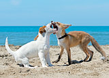 fox and dog on beach