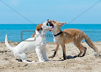 fox and dog on beach
