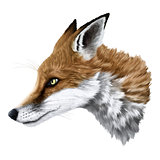 realistic fox portrait