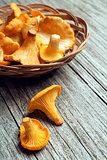 Mushroom Yellow chanterelle