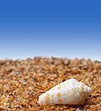 Shell of cone snail on sand
