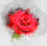 Grunge rose background