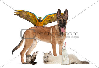 Group of pets isolated on white