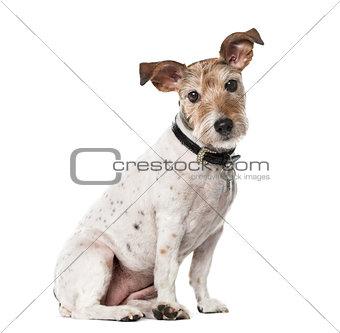 Crossbreed dog isolated on white