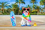 summer vacation paradise dog