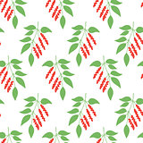 Seamless pattern leaves of Chinese Schisandra