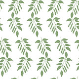 Seamless colorful pattern of Chinese Schisandra