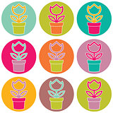 Flower in pot color set on white background