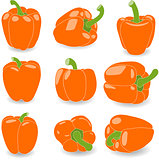 Pepper, set of orange peppers, vector illustration on a transparent background