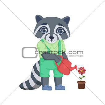 Boy Raccoon Watering The Flower