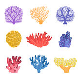 Different Types Of Tropical Reef Coral Set
