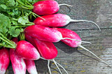 Red radish french breakfast