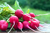 Red radish on a bench