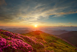 rhododendron in mountains
