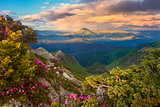 evening mountains and rhododendron