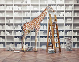 giraffe baby in the  library