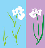 vector iris flower