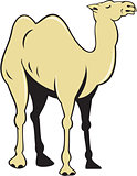 Camel Side View Cartoon