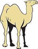 Camel Side View Cartoon