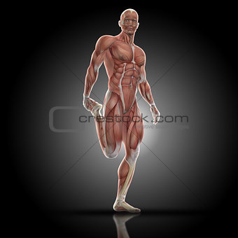 3D render of a medical figure with muscle map doing leg stretch
