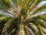 palm tree close-up