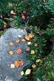 Fall leaves on rock.