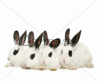 four cute rabbits