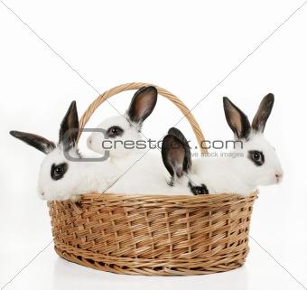 four cute bunnies