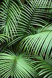 Tropical plant.