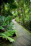 Walkway in rainforest.