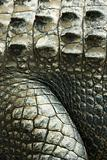 Crocodile skin.